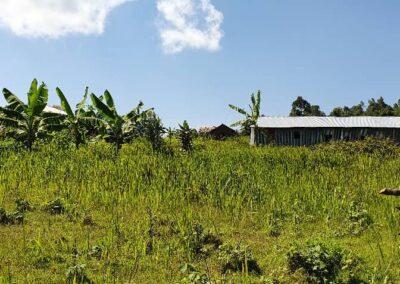 Muchulo pygmy settlement