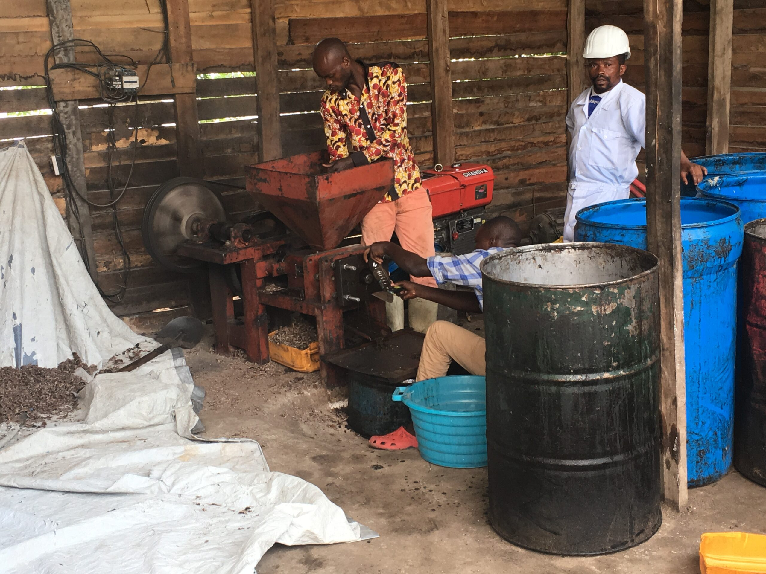 Palm kernel oil pressing